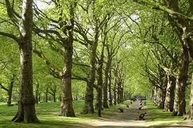 Long An: Hưởng ứng phong trào trồng 1 tỷ cây xanh của Chính phủ